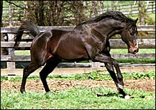 Champion Sprinter Housebuster Dead