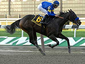 Indian Blessing Makes 2008 Debut