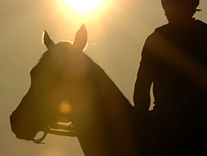 Kentucky, Mexico Team on Equine Industry