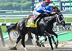 Consistent It's Tricky Wins Ogden Phipps