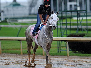 Joyful Victory Favored in Deep Oaks Field
