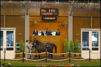 Japanese Foal Sale Ends With Record Gross; Giant's Causeway Colt Brings $1.35 Million