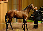Bernardini Colt Sells for $800,000