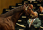 Giant&#39;s Causeway Colt Sells for $950,000
