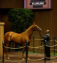 A.P. Indy Filly RNAs for $1,250,000