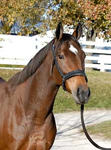 World Record Set For Broodmare at Keeneland Sale