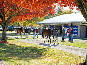 Keeneland November Sale Has 4,695 Lots