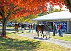 Keeneland's November Sale Has 3,958 Lots