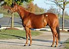Ermine Brings $1.3 Million at Keeneland