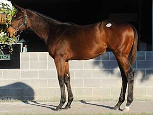 Filly Out of Teeming Brings $1.475