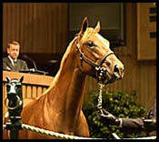 Yearling Market Price Correction Continues at Keeneland's Second Session
