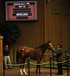 Keeneland September Sale Slumps at Start