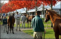 Keeneland Numbers Soar; Limelighter Brings $650,000