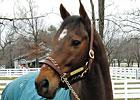 Kona Gold at the Kentucky Horse Park