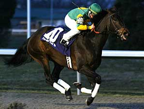 Grade III Winner Lady Belsara Retired