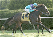 Lapuma Upsets Volga in Dowager Stakes