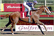 Lion Tamer to Run in Blue Grass; Velazquez Will Ride Indy Dancer in Wood