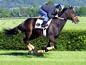 Ohio-Bred--or Not--Entered in WV Derby