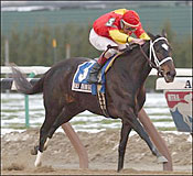 Marc's Rainbow Wins East View Stakes