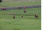 Report of Mares Bred: Pennsylvania Soars