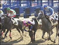 Tweedside Romps in CCA Oaks; Favorite Unseats Rider