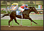 Santa Anita Race Report: Gold Find