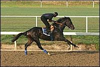 Medaglia d'Oro Heads Frankel Workout Brigade at Hollywood Park