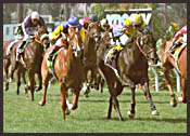 Hollywood Park Race Report: Winning Hertz