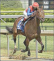 Midas Eyes Breezes 5 Furlongs in 1:00 3/5