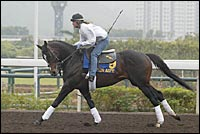 Mister Acpen Among American Horses on Track in Hong Kong