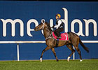 Mubtaahij Fit and Ready for UAE Derby