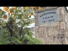 Native Dancer & Sagamore Farm