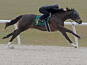 'Deputy' Filly Brings $520,000