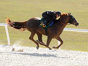 What's Hot? OBS' Buzzworthy Horses