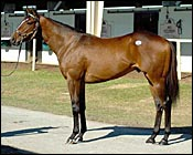 Belong to Me Colt Brings Record $1.8 Million at OBS