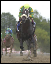 Saratoga Race Report (Cont.)