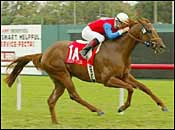 Frankel Hopes Peace Rules in San Rafael