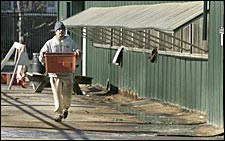 Another Horse Euthanized at Pimlico; Laurel Park Cancels Two Racing Cards