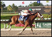 Tampa Bay Derby Could Lure 10 Runners