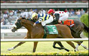 Ten Turf Specialists Vie in Maker's Mark Mile