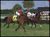 Calder Race Report: Grand Finale