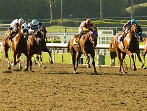 Santa Anita Surface Under Microscope