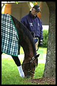 Proud Citizen, Like a Hero Work For Belmont Stakes