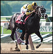 Prominent Broodmare Pennant Fever Dead