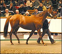 Diesis Mare Brings Record Price at Tattersalls December Sale