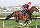 Recapturetheglory Out of Preakness