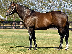 Redoute's Choice Colt Is Magic