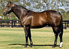 Top Aussie Sire Represented at Del Mar