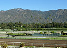 Santa Anita&#39;s Main Track Opened