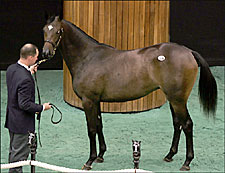 A.P. Indy Filly Tops Fasig-Tipton's First Session